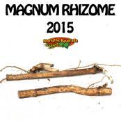 2015-Rhizomes-Magnum-AB.jpg