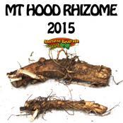 2015-Rhizomes-MtHood-AB.jpg